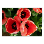 Apenas tulipanes atractivos felicitacion