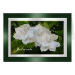 Apenas un Gardenia de la tarjeta de nota florece f