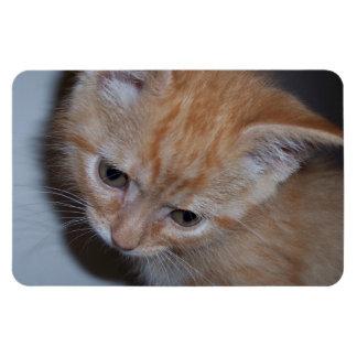 Apenas un gatito imanes de vinilo