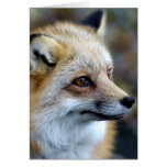 Apenas un pequeño Fox lindo Tarjeta