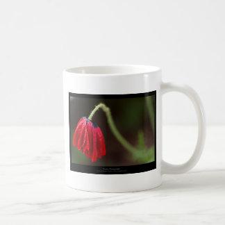 Apenas una flor - amapola roja 012 de la flor taza de café