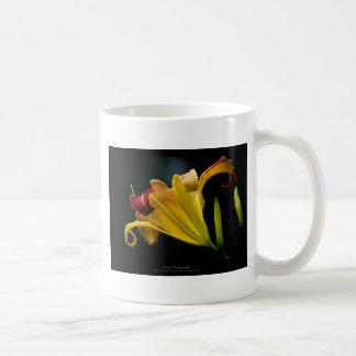 Apenas una flor - flor amarilla 016 del lirio tazas