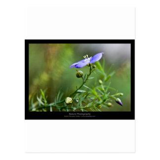 Apenas una flor - flor azul 002 tarjeta postal