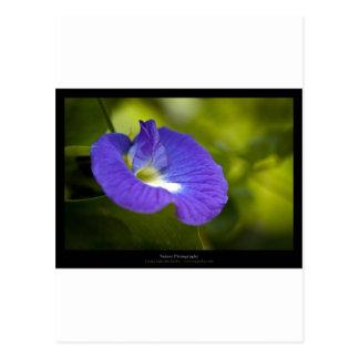 Apenas una flor - flor azul 006 postales