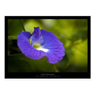 Apenas una flor - flor azul 006 tarjeta postal