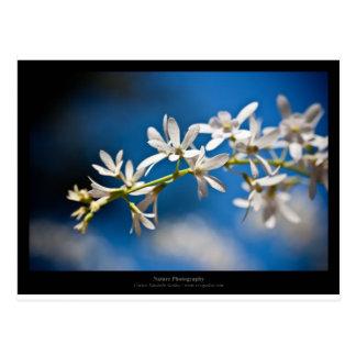 Apenas una flor - flor blanca 004 postal