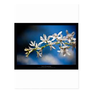 Apenas una flor - flor blanca 004 tarjeta postal