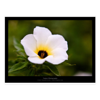 Apenas una flor - flor blanca 019 tarjetas postales