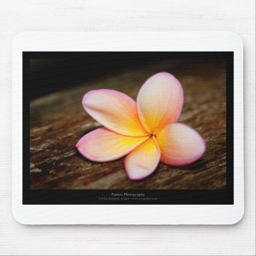 Apenas una flor - flor simple 003 mouse pad