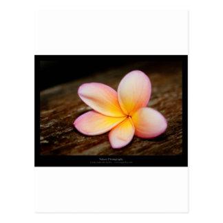 Apenas una flor - flor simple 003 tarjeta postal