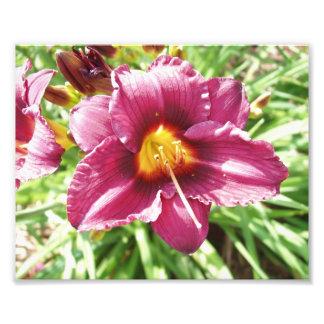Apenas una flor impresionante fotografia