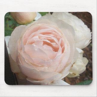 Apertura de un color de rosa rosado alfombrillas de ratón