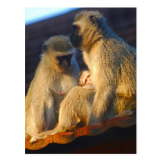 Apes family moments postcard