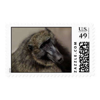Apes love forever postage