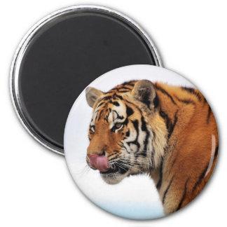 Apetito de los tigres imán redondo 5 cm