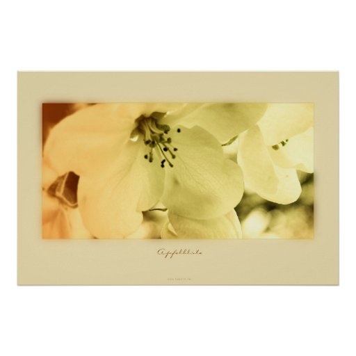 Apfelblüte Poster