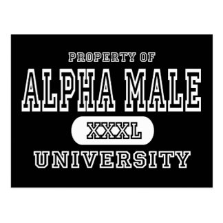 Apha Male Univeristy Dark Postcard