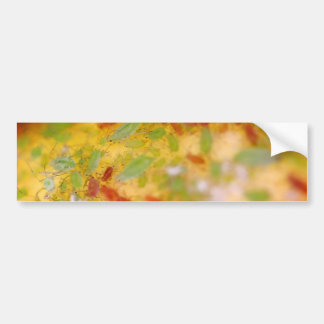 Aphids Bumper Stickers