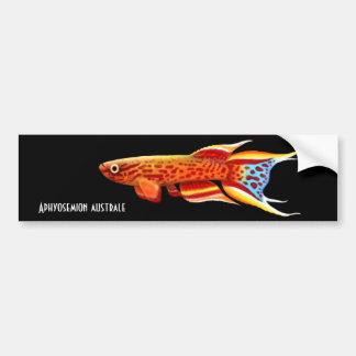 Aphyosemion Australe Killifish Bumper Sticker