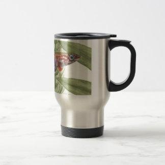 Aphyosemion elberti Killifish single Travel Mug