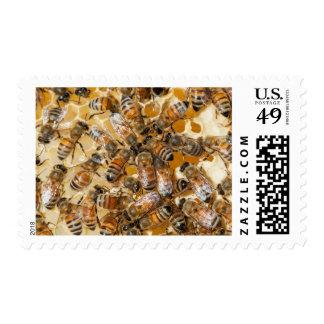 Apicultura en la granja de la miel de Arlo Sello