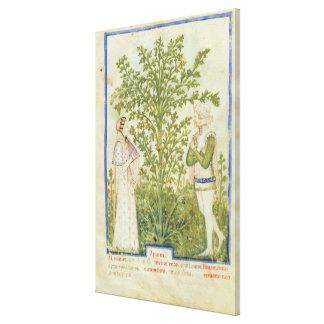 Apio del lat de Nouv Acq de Tacuinum Sanitatis Impresión En Lona