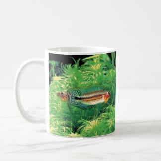 "Apistgramma sp. The magnetic cup ""of Miua"" Classic White Coffee Mug"