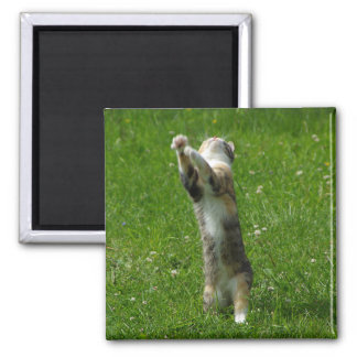 Aplauda sus manos #1 iman de frigorífico