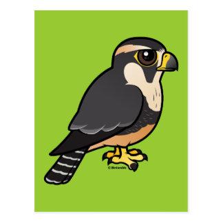 Aplomado Falcon Postcard