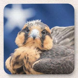 Aplomado Falcon with Flag Drink Coaster