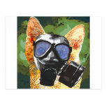 Apoco Cat Postcard