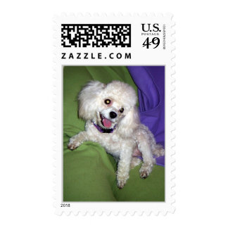 Apollo, Ginger and Cookie 9-07 072 Postage Stamps