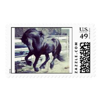 Apollo the Friesian horse stallion Postage