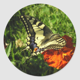 Apollon  Butterfly! Classic Round Sticker