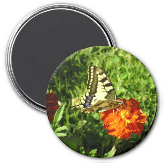 Apollon Butterfly! 3 Inch Round Magnet