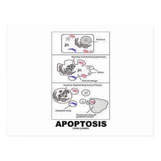Apoptosis (muerte celular de la biología) postal