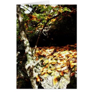 Appalachain Trail #11, va Card