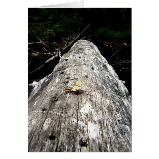 Appalachain Trail #5 Card
