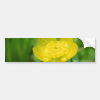 Appalachian Buttercup Bumper Sticker