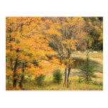 Appalachian Gap Pond Vermont Postcards