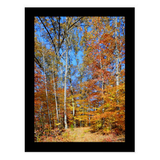 Appalachian Trail Autumn, Fall Scenery Postcard