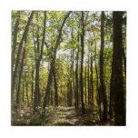 Appalachian Trail in October at Shenandoah Ceramic Tile