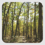 Appalachian Trail in October at Shenandoah Square Sticker