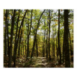 Appalachian Trail in October Poster Print
