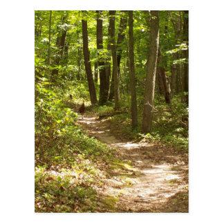 Appalachian trail turkey postcard