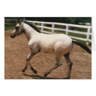 Appaloosa / Colorado Ranger Colt Card