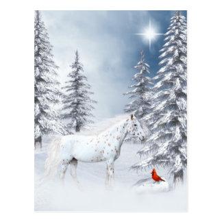 Appaloosa del invierno postales
