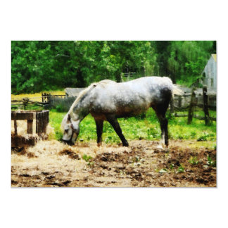 Appaloosa Eating Hay Card
