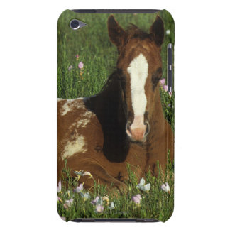 Appaloosa Foal Laying Down in Flowers Case-Mate iPod Touch Case