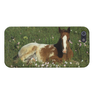 Appaloosa Foal Laying Down in Flowers Cover For iPhone SE/5/5s